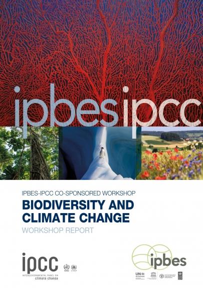 Emergència climàtica i ecològica